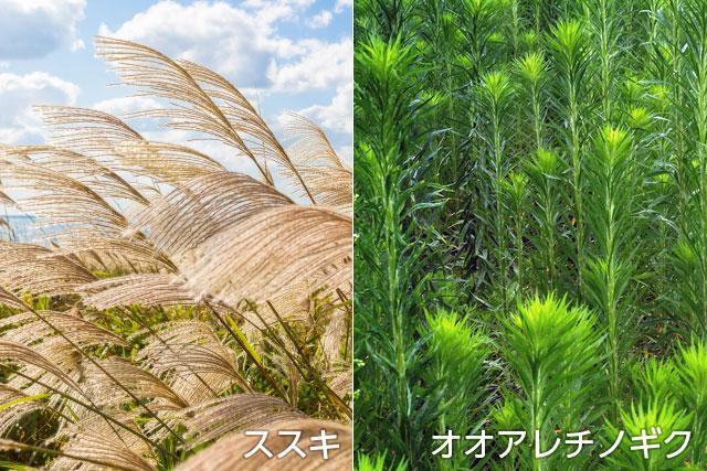背の高い雑草